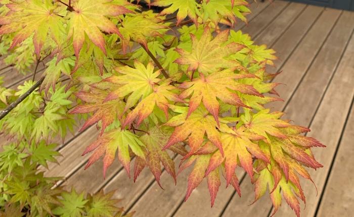 Spätsommer- und Herbststimmungen